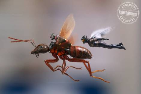 ant-man-wasp-800x533